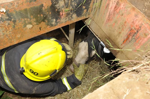 Horse Chico rescued from underground bunker. Source image.