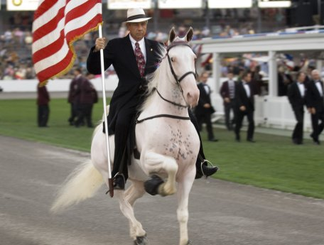 Tennessee Walking Horse National Celebration / McConnell.
