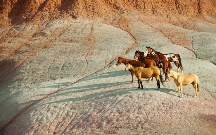 Wild Horses Wyoming. Google image.