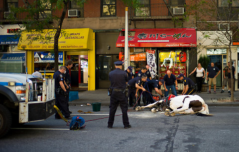3 injured when Manhattan carriage horse Oreo bolts and breaks free