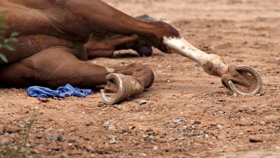 Racehorse dead in the dirt at NM racetrack. Photo: Jakob Schiller.