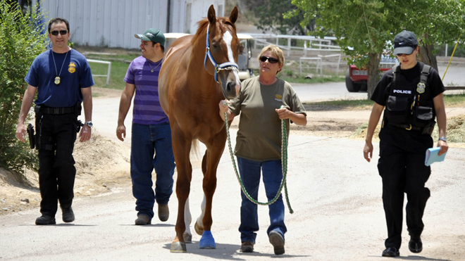 Drug Raid Horse Confiscated by Feds.  (AP Photo/The El Paso Times, Mike Curran)