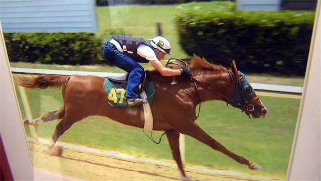 Former racehorse Marco was stolen and slaughtered near his home in Southwest Ranches, Florida.