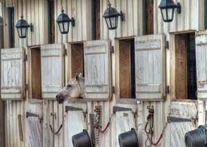 HHorse in neatly arranged stable. Photo credit: Andy Bernay-Roman / Flckr.