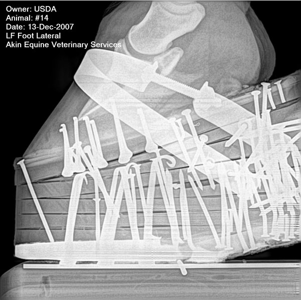 Horse soring radiograph. USDA image.