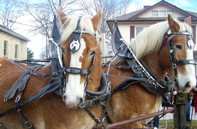 The History of the Draft Horse – Tuesday's Horse