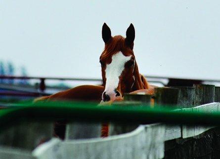 Crundwell Horse. Photo credit: Alex T. Paschal.