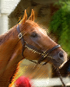 Curlin Headshot