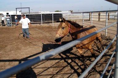 Hutchison inmate training a Wild Horse. Image posted on Facebook.