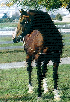 Northern Dancer 1961-1990