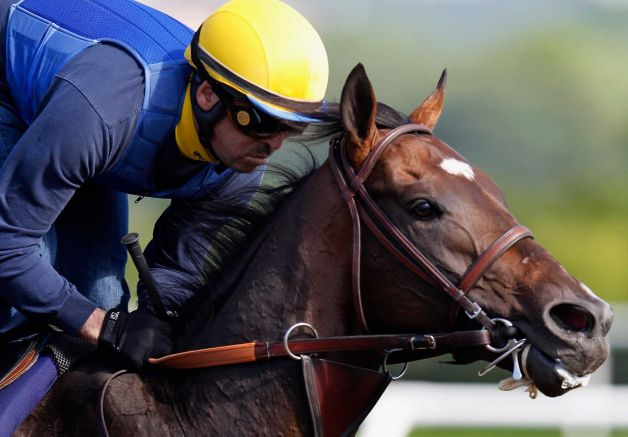 Paynter training at Elmont NY for the Belmont Stakes 2012. Times Union image.