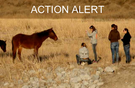 Take Action for the wild horses of Reno. Protect Mustangs image.