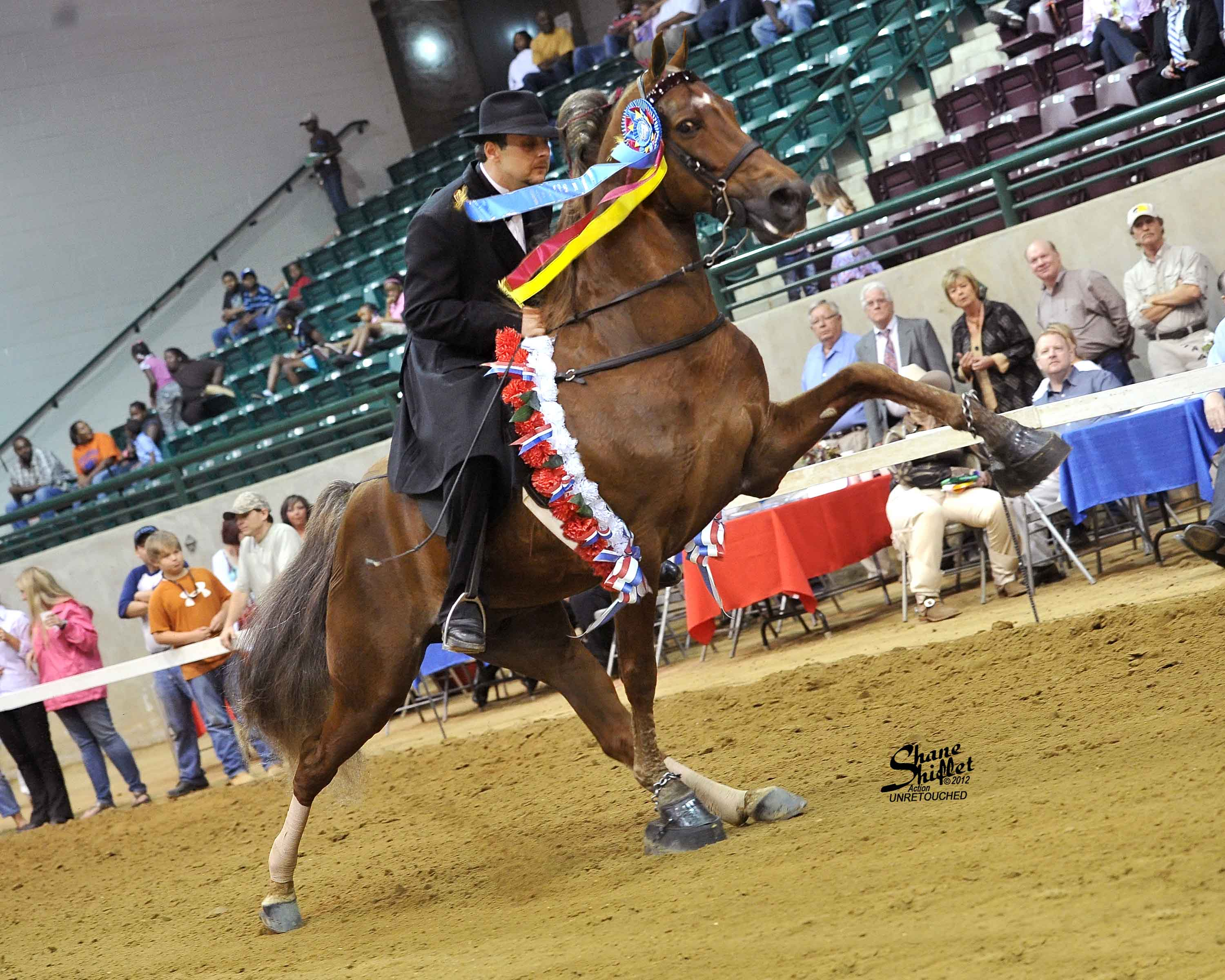 Protest the cruel abuse of Tennessee Walking Horses in Columbia, TN