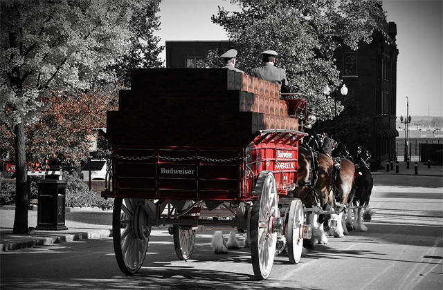 Clydesdale drawn Budweiser carriage. Google image.