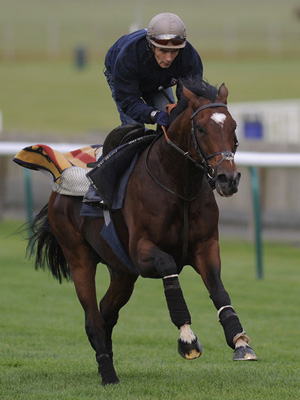 Frankel gallops on Newmarket Heath.