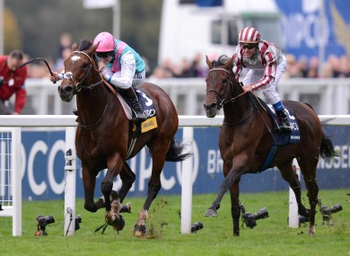 Frankel recording his 14th and final victory at Ascot. Photo: The Vault.