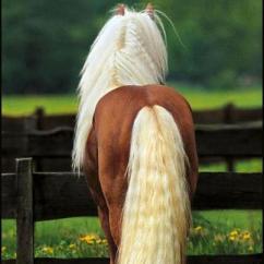 HorseSlideshow1