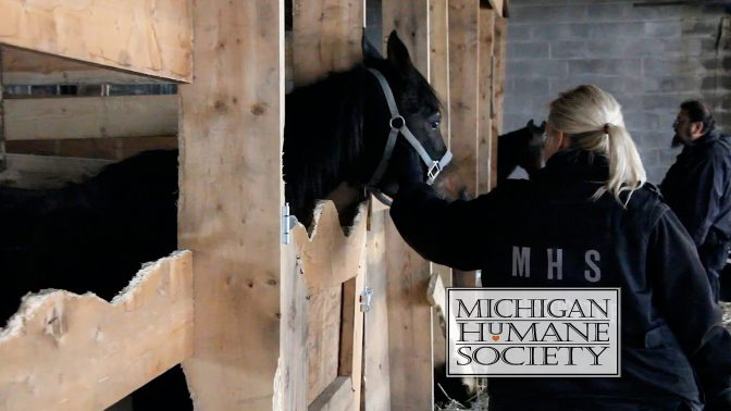 Horses found abandoned Detroit warehouse. Photo: Michigan Humane Society.
