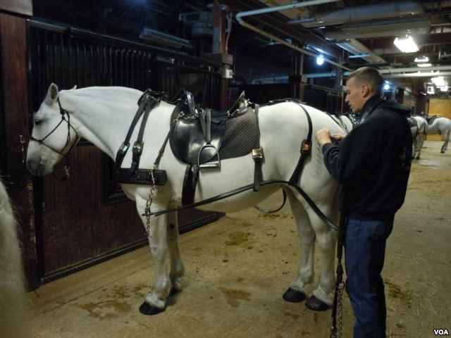 Caisson Horse Arlington National Cemetary. Photo: VOA / Julie Taboh.