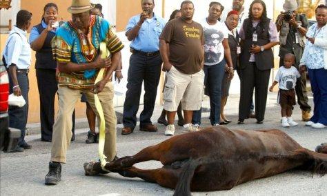 Dead Carriage Horse Bahamas. Tribune 424 Image.