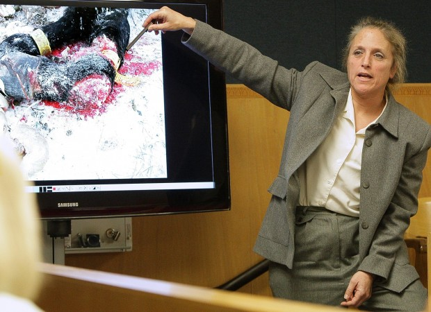 Expert Jenifer Gold testifies in Leachman horse abuse trial. Photo: Bob Zellar.