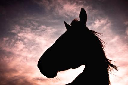 Horse in silhouette. Photo: iStockPhoto.com.