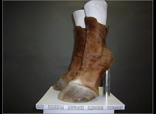 Horse Hoof Heels. Image: Huffington Post.