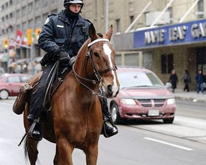 Toronto Police Horse Royal Sun. Photo by Anne DeHaas.