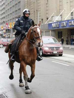 Toronto Police Horse Royal Sun. Photo by Anne DeHaas.