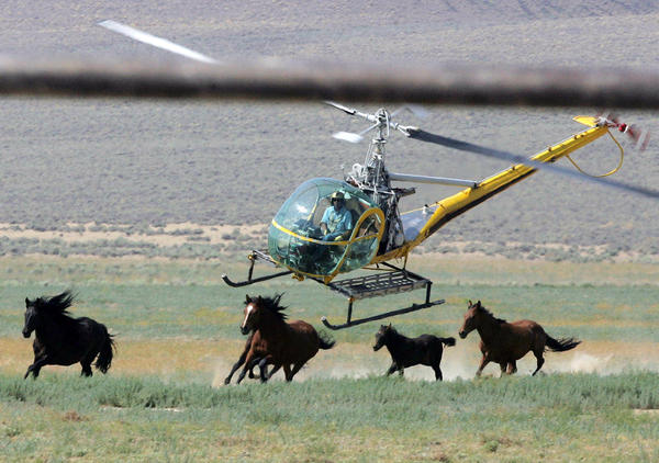 Image from 2008 Washoe County Helicopter Roundup. Brad Horn / AP.