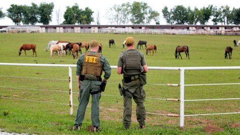 Zeta cartel horses seized and sold by Federal Govt. CBS News Photo.