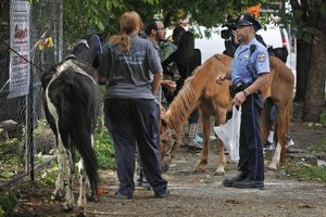 Abandoned horses have been a problem in Philadelphia. A new ordinance regulating the keeping of horses in the city has been introduced. Philadelphia Inquirer photo.