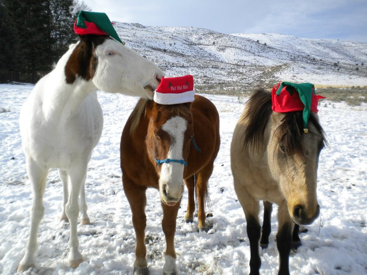 Horses with Santa Hat in Snow. Google image.