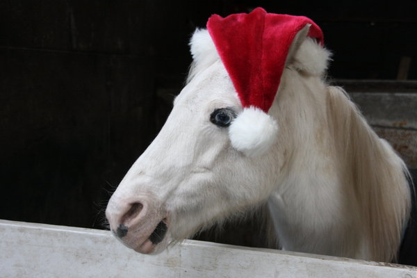 merry christmas from ifh and tuesdays horse - Christmas Horses