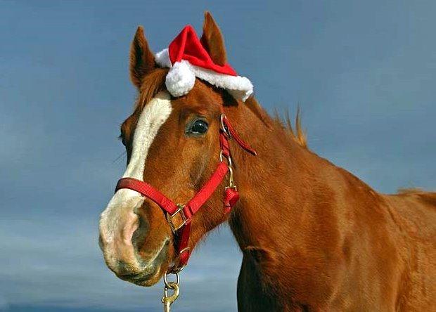 Horse in Santa Hat. Google image.