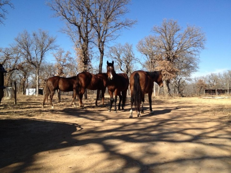 North Texas Horses. Photo: Kay Marie.