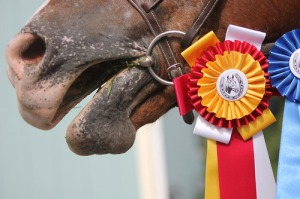 Horse with show ribbons. Tumblr image.