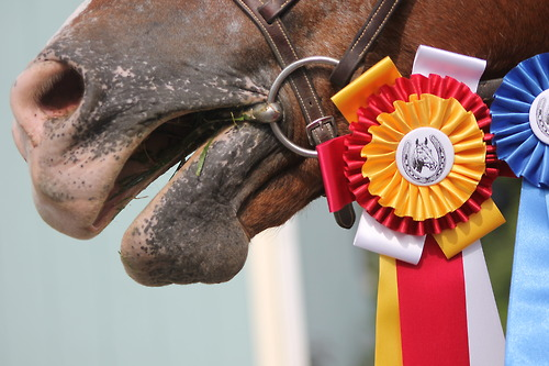 Horse with show ribbon. Tumblr image.