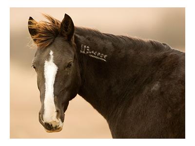 Branded Mustang. Google image.