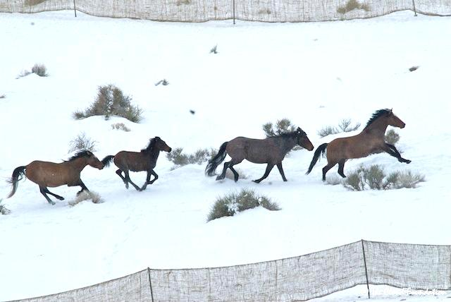 Swasey Herd Roundup 2013 Utah. The Cloud Foundation image.