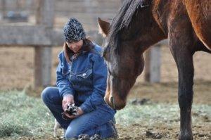 Image courtesy Lifesavers Wild Horses Rescue.