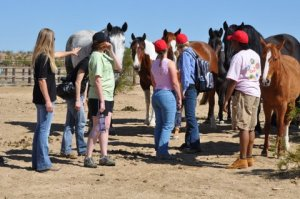 Image courtesy Lifesavers Wild Horses Rescue.