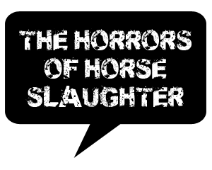 The Horrors of Horse Slaughter talk balloon. Tuesday's Horse.