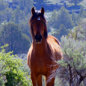 Wild horse in the brush. Google image. Photographer not specified.