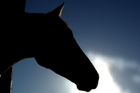 Horse profile in silhouette against blue sky. Google image.