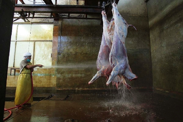 Worker in Juarez, Mexico slaughter plant washing down horse carcasses. Photo credit: Jerry Lara/AP.