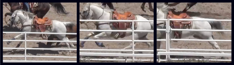 Horse run dangerously close to fence during steer wrestling event. The horse was seriously injured and reasonably believed dead. SHARK images.