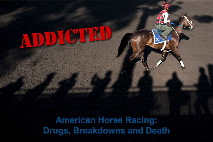 American Horse Racing - Addicted to Death. Tuesday's Horse.