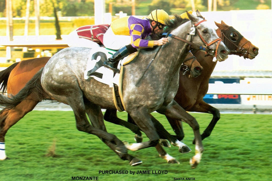 Gr. 1 winner Monzante powers home to get his fourth US victory, Santa Anita, 2010. Photo: JamieLloyd.com.
