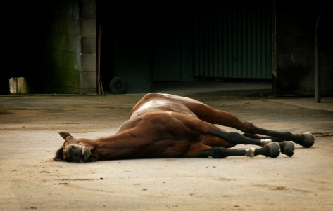 Pride Of Westbury's lifeless body lying on concrete behind the racetrack, out of view of racegoers. Photo: HorseRacingKills.com.